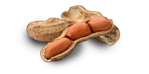 Nutnose – Nuts, Seeds and Dried Fruit